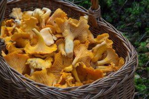 Eguisheim - champignon